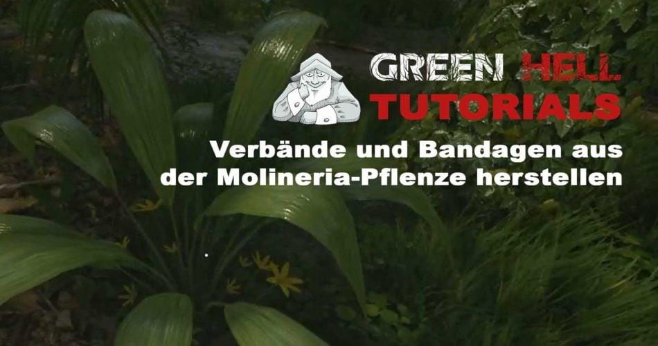tutorial_verband-molineria-pflanze-2020-05